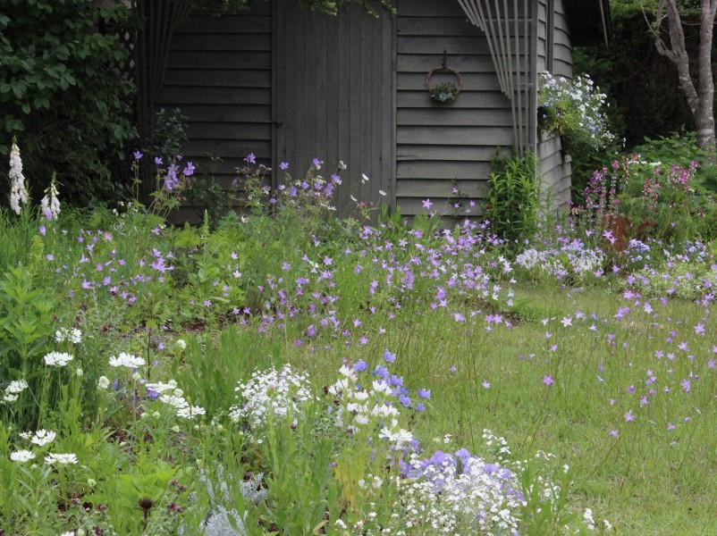 今月の芝生周りの花壇